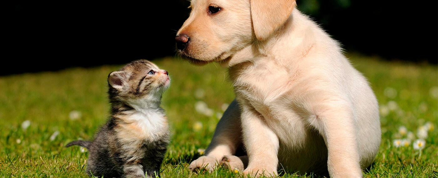Поможем бездомным животным вместе