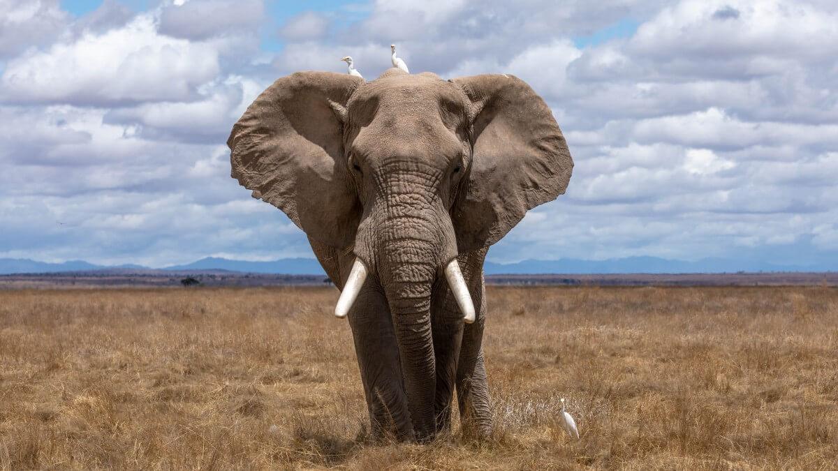 Притча: Слон и аскет