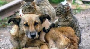 Что происходит с бездомными животными сейчас?
